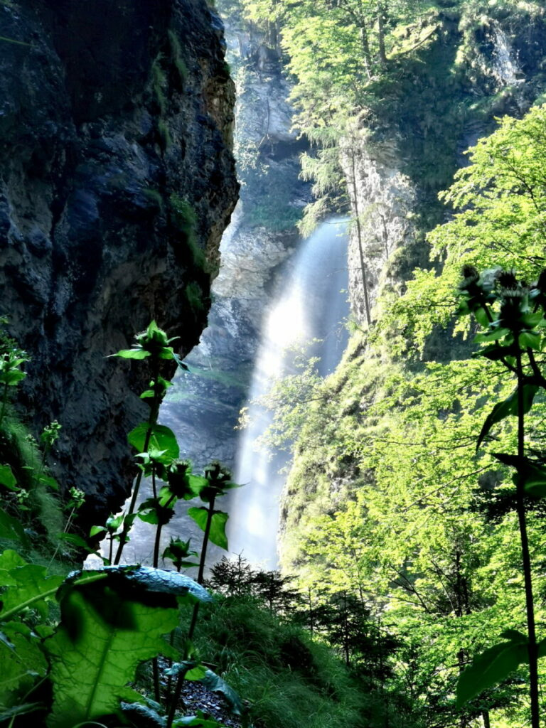 Entdecke das bekannte Naturdenkmal in Österreich!
